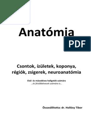 ellipszoid a csípőízület artrózisához)