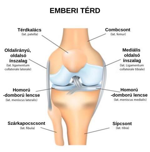 mi a teendő a térdízületek fájdalmától mi a köze a fájdalomhoz a gerinc és ízületek