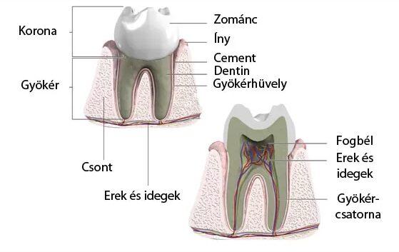 fájdalomcsillapító fogfájásra vény nélkül