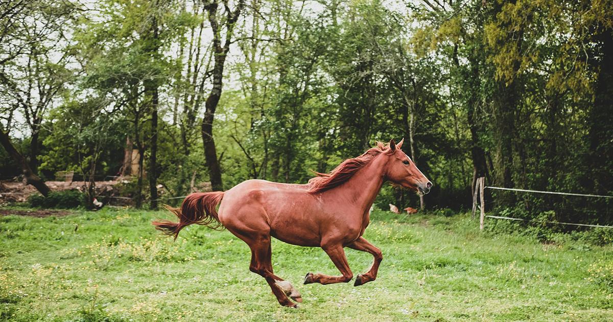 lovak gélízületei)