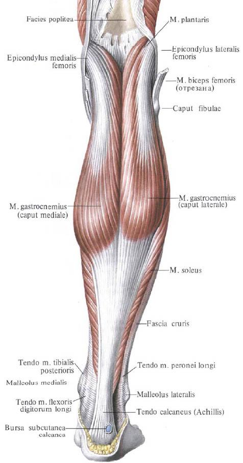térdízületi fájdalom vizsgálata térdszorító futás