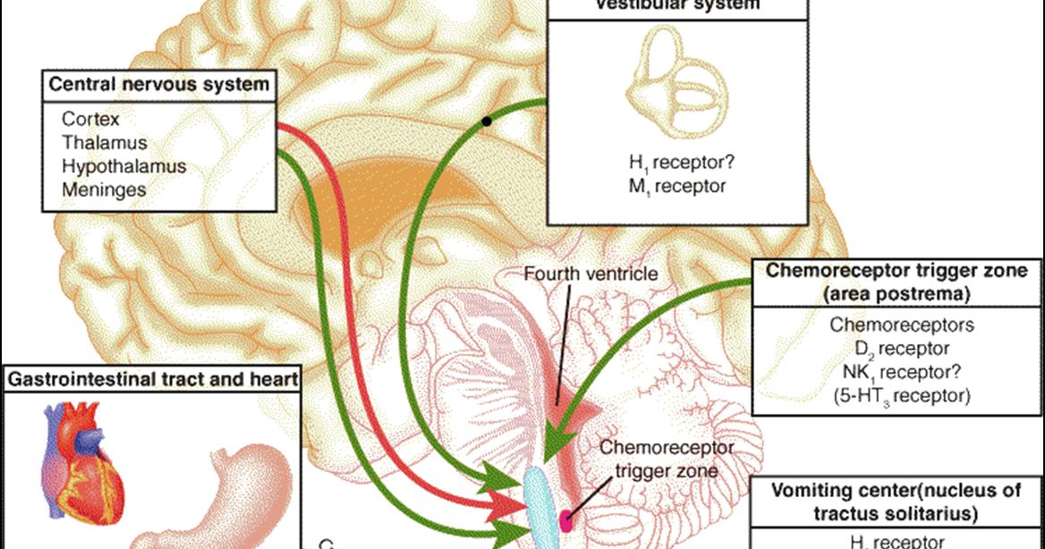 ízületi fájdalom citomegalovírussal)