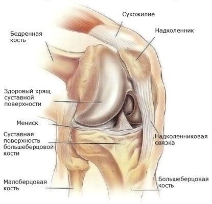paracetamol a térdízület fájdalmáért)