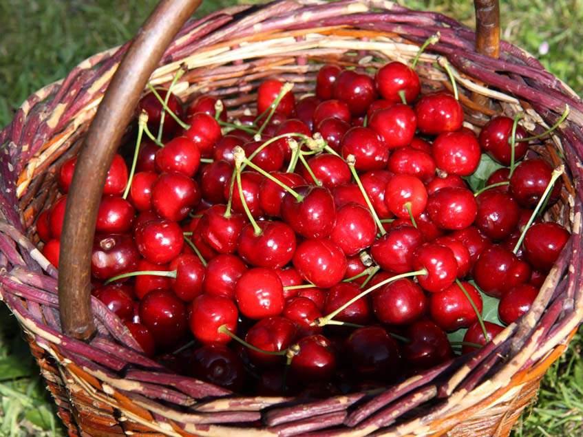 Cseresznye – Wikipédia