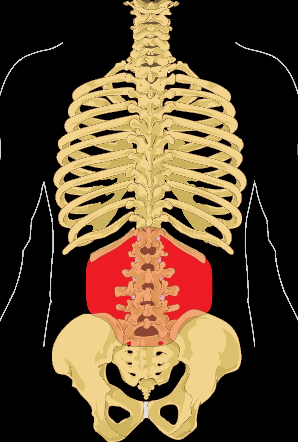 ízületek és a hát alsó része