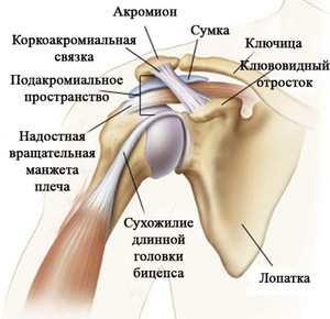 a vállízület ligamentuma károsodása)