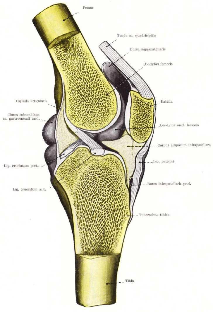 a vállízület ízületi gyulladása. a borjúízületek fájdalmainak gyengesége