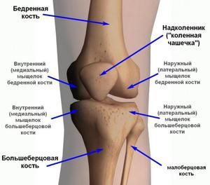 boka ligamentum sérülésének helyreállítási periódusa)