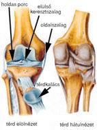 térdizületi arthrosis kezelése)