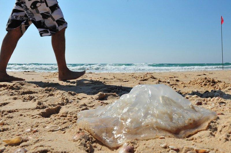 Medúzák találhatóak a Magyarországi vizekben