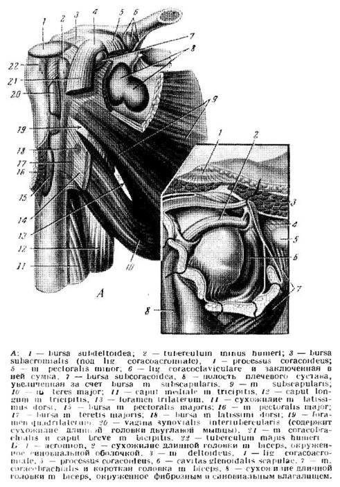 az acromioclavicularis ízület deformáló artrózisa)