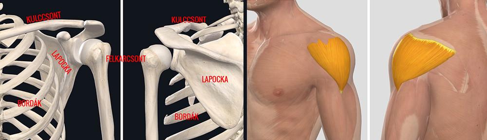 ha a jobb kéz vállízülete fáj, kezelést kell végezni)