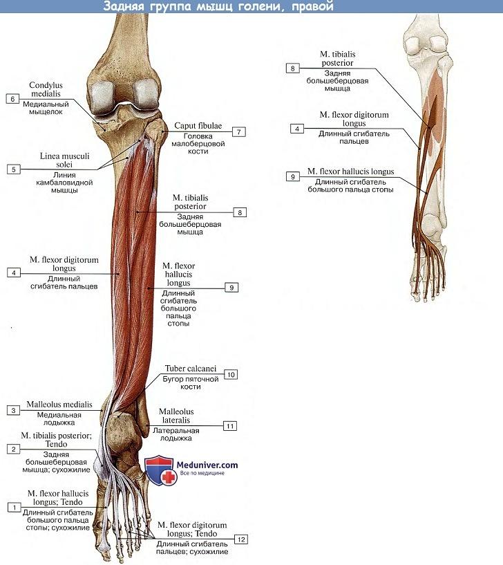 fájdalom a lábak metatarsális ízületeiben)