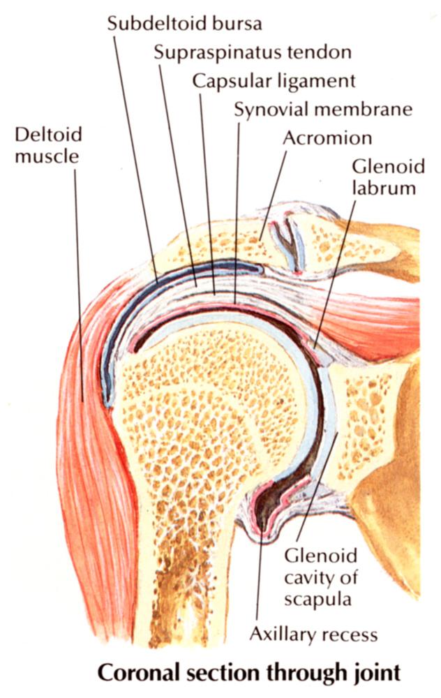 krónikus vállízületi gyulladás milyen termékek lehetséges a térdízület artrózisával