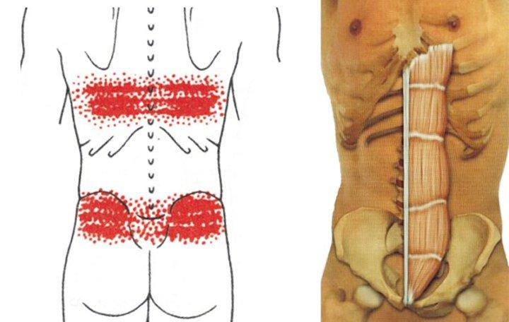 A test, a lábak, a karok, az ízületek és az izmok elvesztése - miért kell tennie?