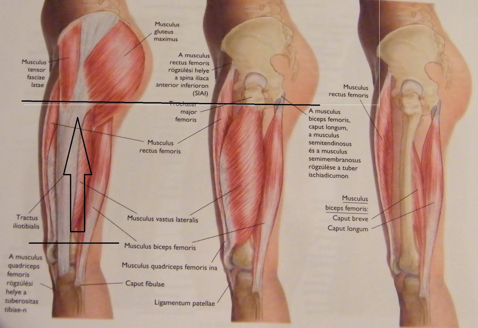 csípő és lágyékfájdalom