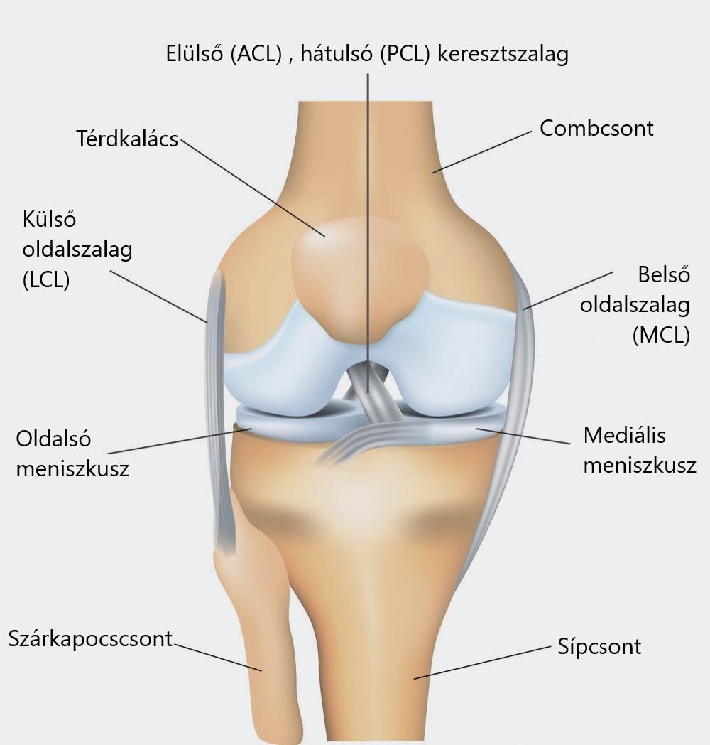 fájdalom térdízületi diagnózis alatt)