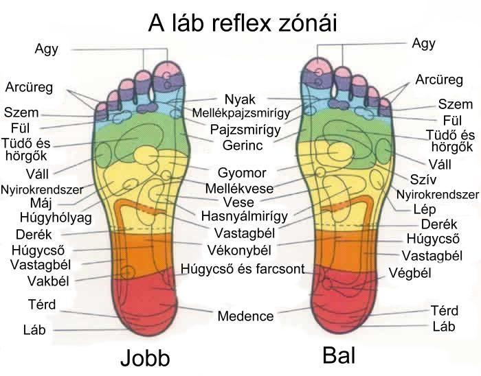 reflexológia a térd artrózisában)