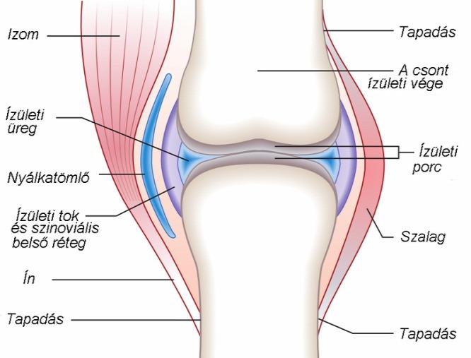 folyadék a térdízület artrózisában)