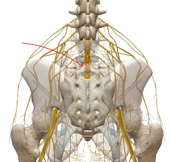 fáj a csípőízület az alsó hátból)