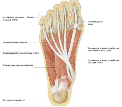 a hüvelykujj fáj a járás közben