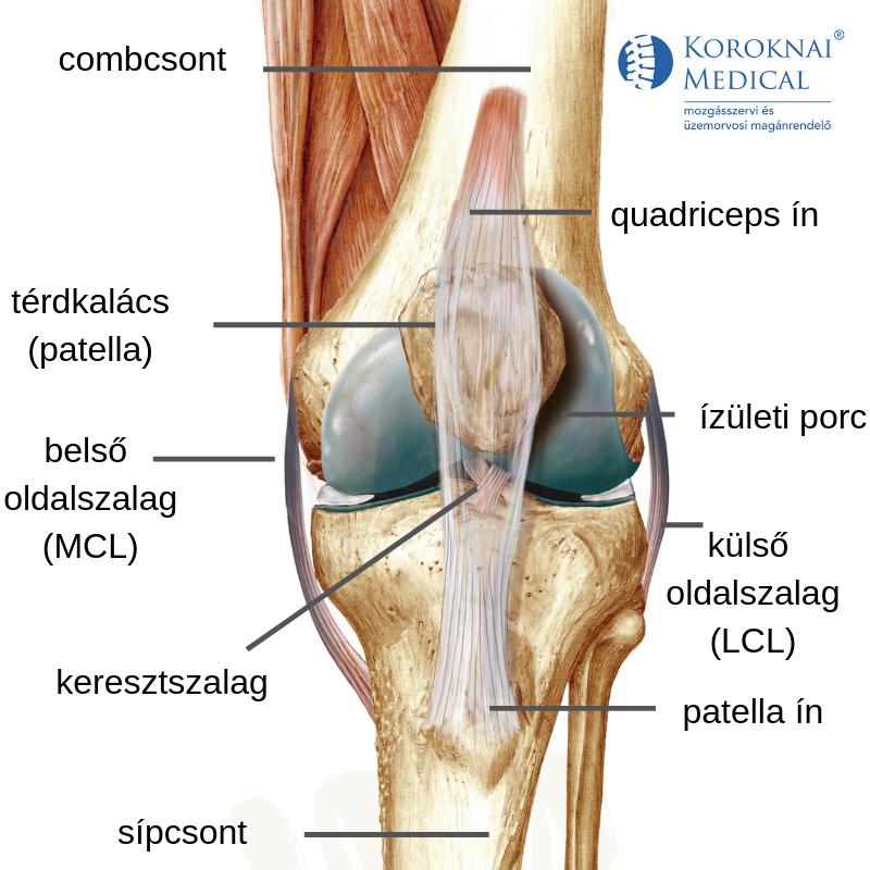 térdízületi fájdalom vizsgálata