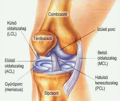 a jobb térd artrózisának kezelése)