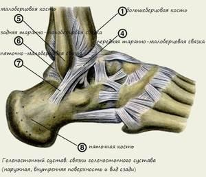 a boka deltoid ligamentumának károsodása)