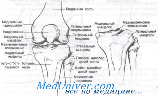 Az ízületi kontraktúra jellemzői: okok, típusok, tünetek és kezelés - Térd