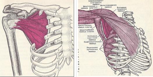 a clavicularis-acromialis ízület artrózisa 2 fok fájdalom a lábak alsó ízületeiben