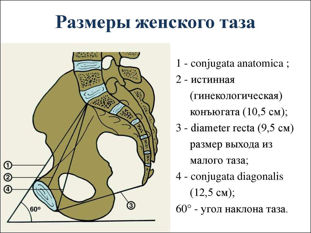 a combcsontok ízületének osteochondroze)