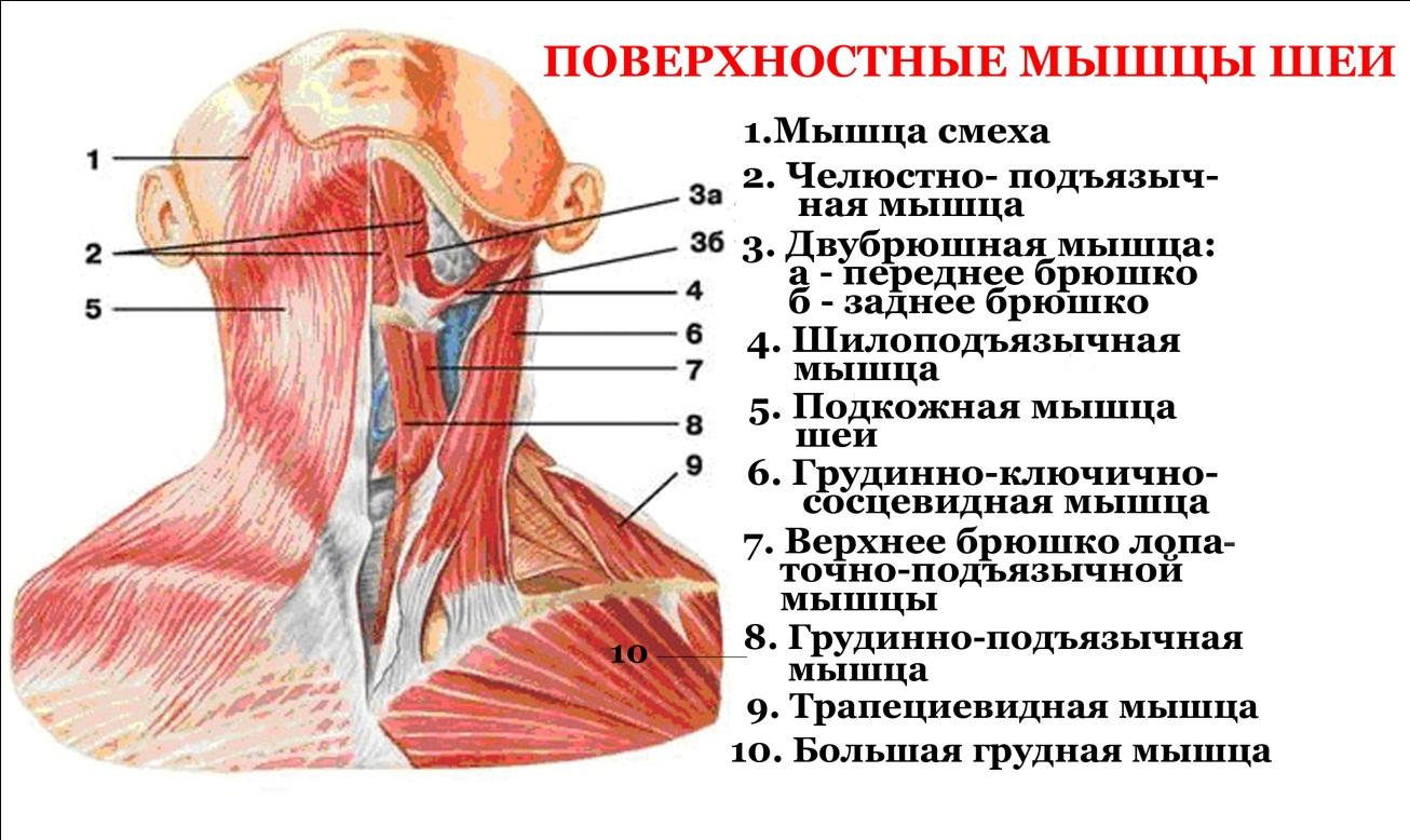 tanácsos kenőcső a nyaki osteochondrozistól