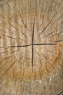 Berepedezett sarkak: sarokbalzsam és termékek száraz lábra - Scholl
