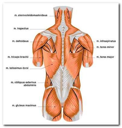 a gerinc kötőszövetének betegségei)