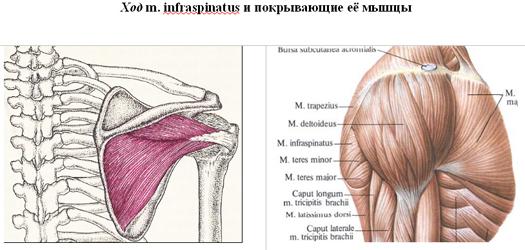 a könyökízület artrózisának blokádja