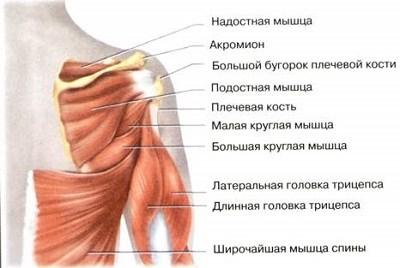 a vállízület ligamentuma károsodása