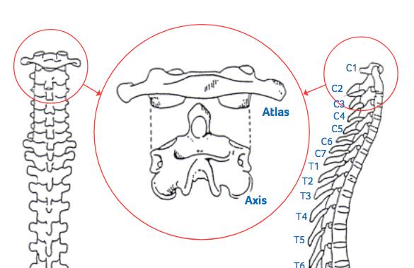 a fájdalom okai és a vállízület kezelési módszerei idegszál gyulladás derékfájás