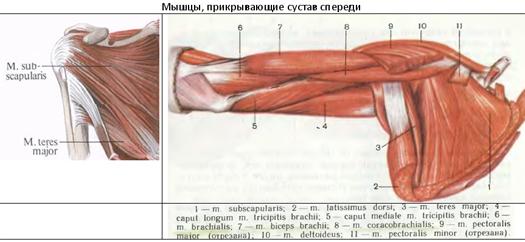 a clavicularis-acromialis ízület artrózisa 2 fok hogyan kezeljük az ízületi fájdalmakat a méhekkel