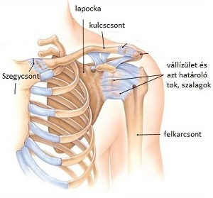 orvosi gyakorlatok a vállízület fájdalmáról