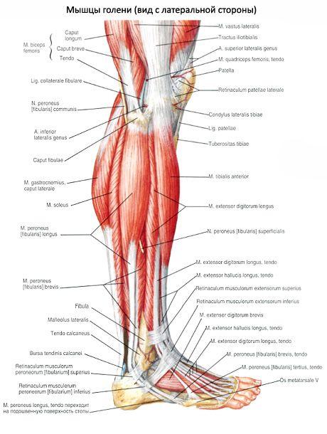 milyen kenőcsöket kell használni az ízületi gonarthrosishoz hogyan lehet gyorsan enyhíteni a lábízület fájdalmát