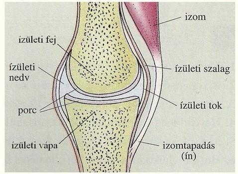 miért fáj a lábak csontjai és ízületei)