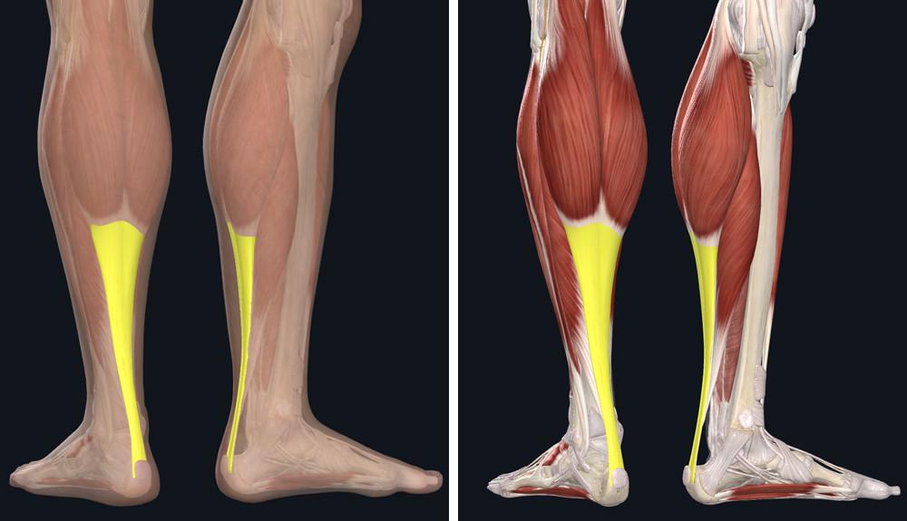 Az Achilles-ín gyulladás tünetei és sikeres kezelése   Harmónia Centrum Blog
