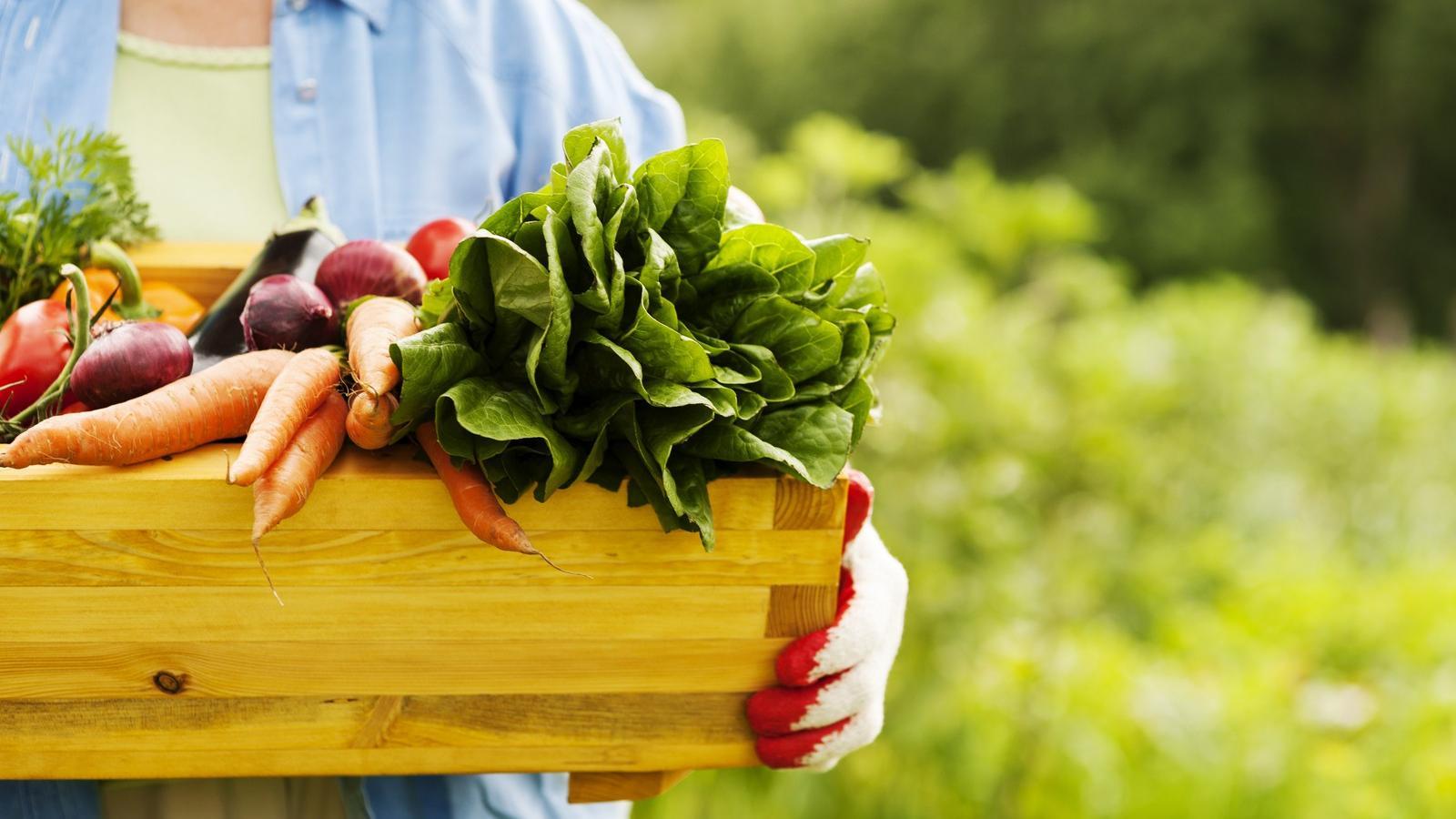 egészséges közös termékek