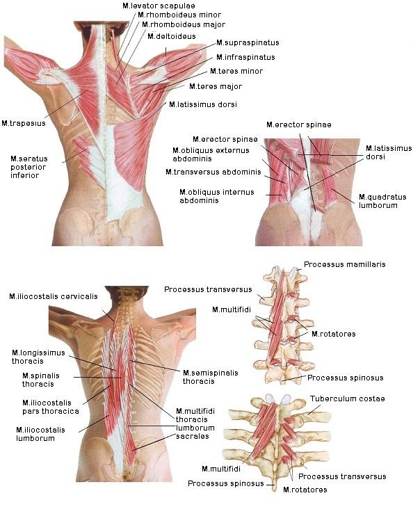 boka lympostasis kezelés artrózisos kezelés betegek áttekintése