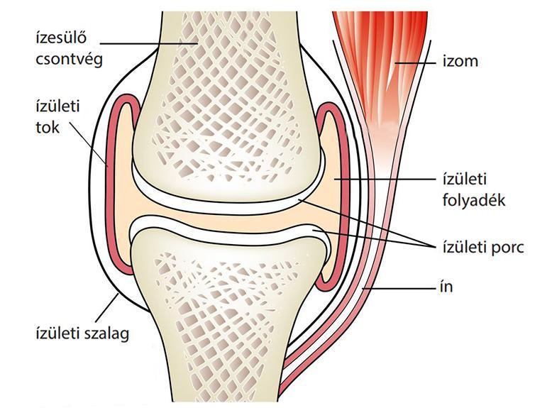 hamis ízületi sípcsont kezelése artrózis tünetei