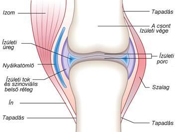 hány fokú artrózis a térd