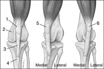 térdízület fájdalom blokk