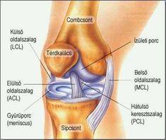 térdízület folt artrosis