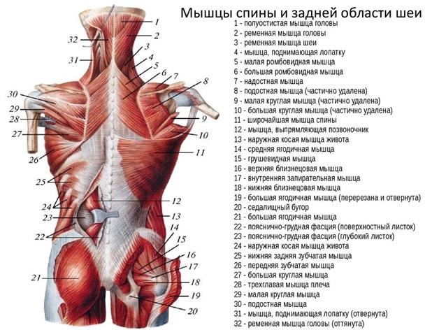 ízületek fájnak és repedés reggel)
