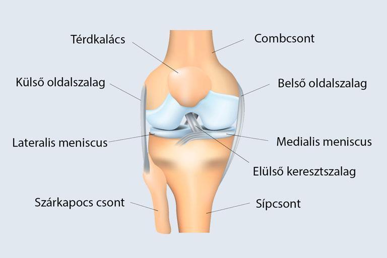 térdízületi fájdalom nyomáskor miért fáj a redők ízületei